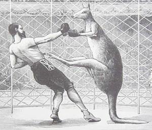 kangaroo-boxing-300x256